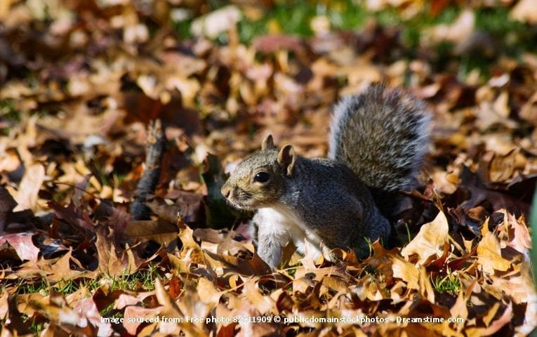 Tender Care Lawn Services | Sulphur and Lake Charles Lawn Service - Fall Leaf Cleanup
