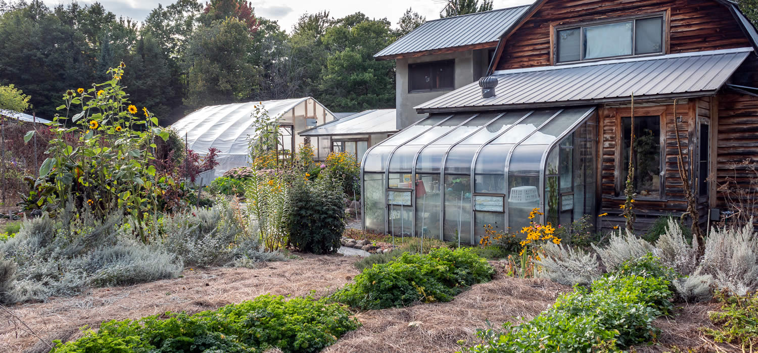 silver-sage-greenhouse and flowers