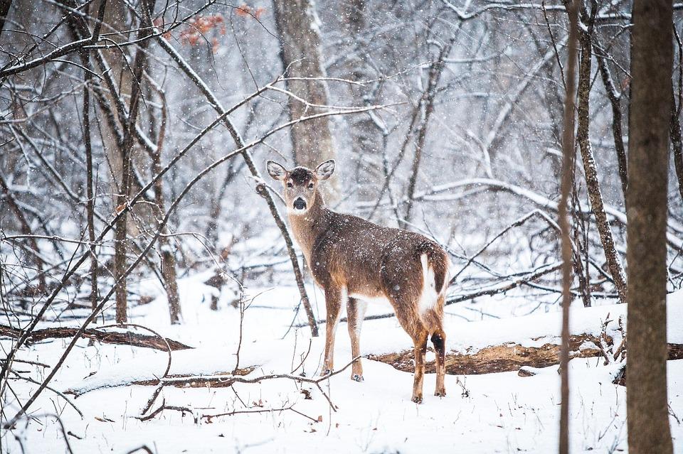 deer totem in the Native American zodiac
