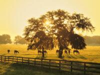 Nature Sunrise Photography