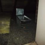 Pests in the attic