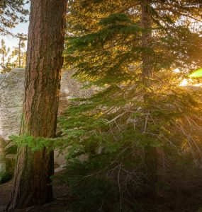 Black Mountain Bouldering - woman rock climbing with pine trees and sunlight
