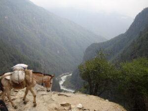 Everest Base Camp: Donkeys and yaks
