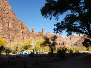 Supai is an oasis in the unforgiving desert canyon. Yellow trees by a stream.