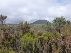 Summit Kilimanjaro and see the low shrubs of the heath and moorland.