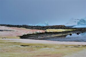 The shores of Antarctica can be red, green, black, and gray, not the typical white you would expect.