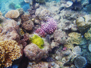 SCUBA diving the Great Barrier Reef reveals colorful corals and aquatic life