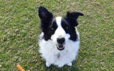 Dogs as experts on emotional confidence