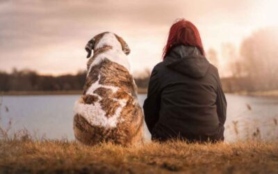 Our pets get us – but do we get them