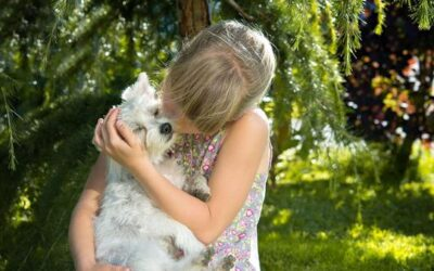 Pros and Cons of Animal Adoptions