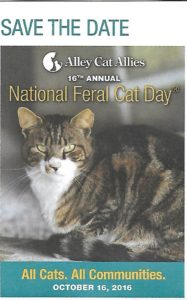 National Feral Cat Day (2)