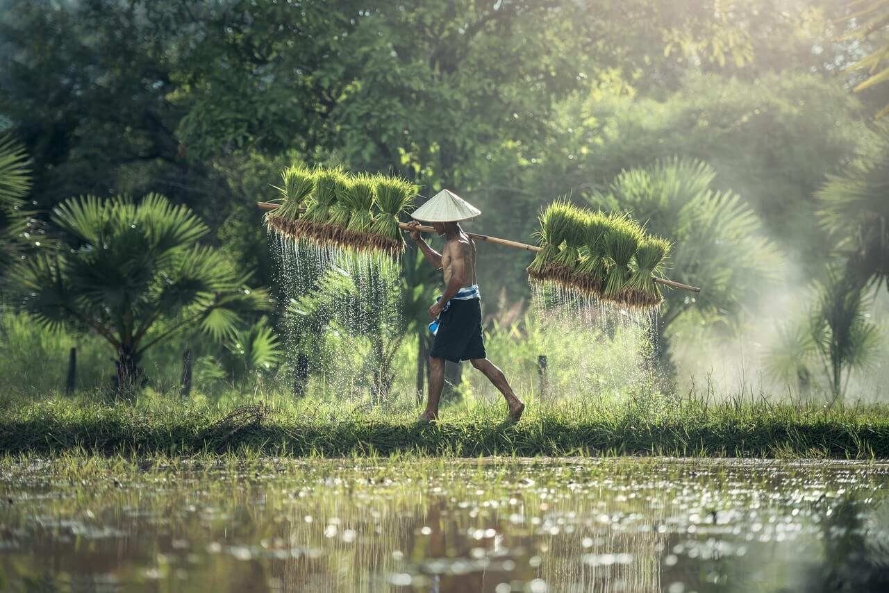 Ingredion to expand rice manufacturing - food tech news in asia