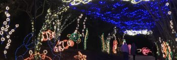 Magic Christmas in Lights in USA Today