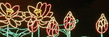 First Magic Christmas in Lights