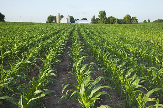 Nebraska Crop Conditions