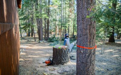 Hazard Trees & Limbs On Property