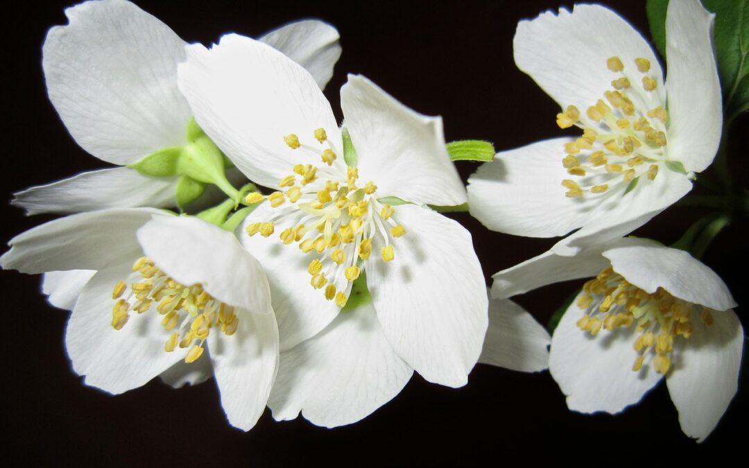 Jasmine: An Absolute for this Pandemic