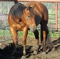 Heide Veterinary LTD