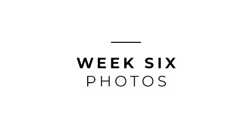Week Six