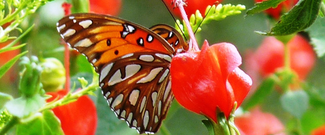 The Kalorama Reily Nature Preserve Collinston