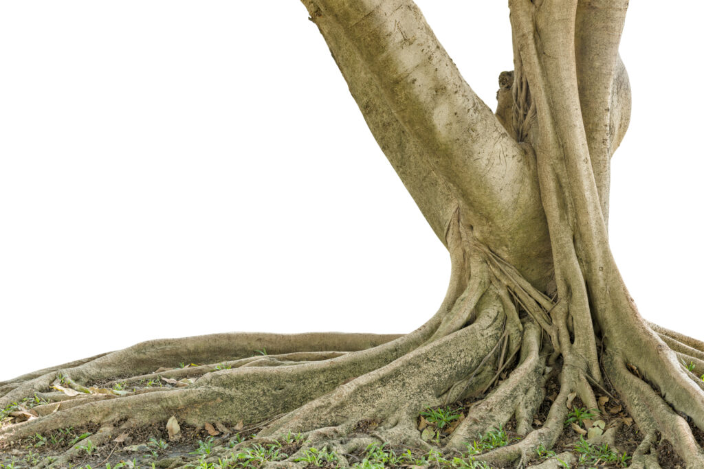 Our Arborists Assess More Than Tree Roots and Tree Trunks