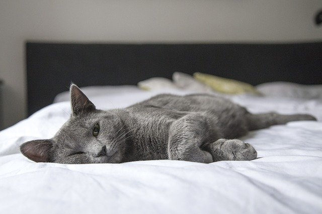 7 Tips to Getting a Restful Night's Sleep