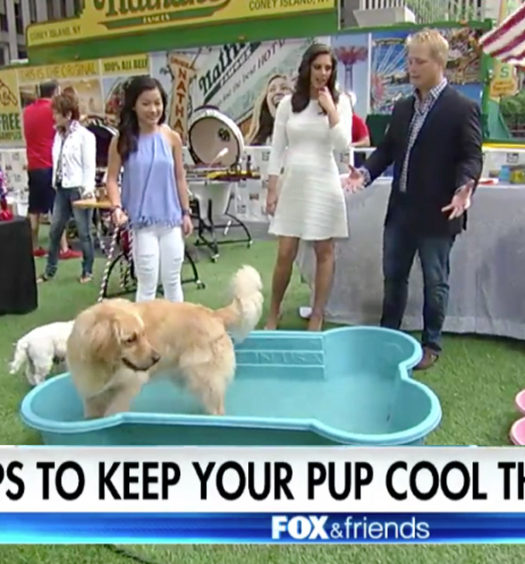 5 Ways to Keep Dogs Safe and Cool in Hot Weather