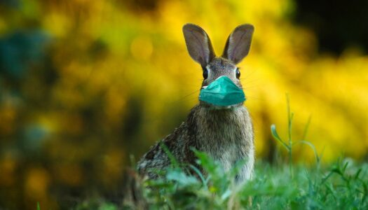 5 Amazing Ways to Celebrate Easter Online Safely