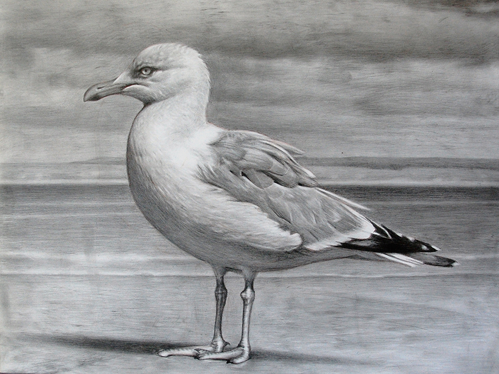 seagull2012s