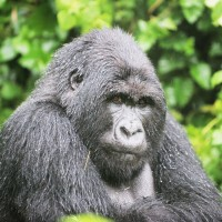 Uganda and Rwanda Gorilla Trek