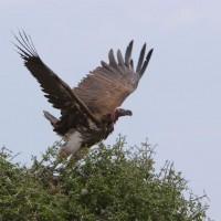 Kenya Bird Watching