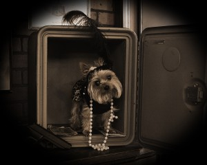 27 - Best Portrait of a Pet(s) or a Pet(s) with Its Owner ~ Nikki Hodge, Buster's Old Time Photos Branson
