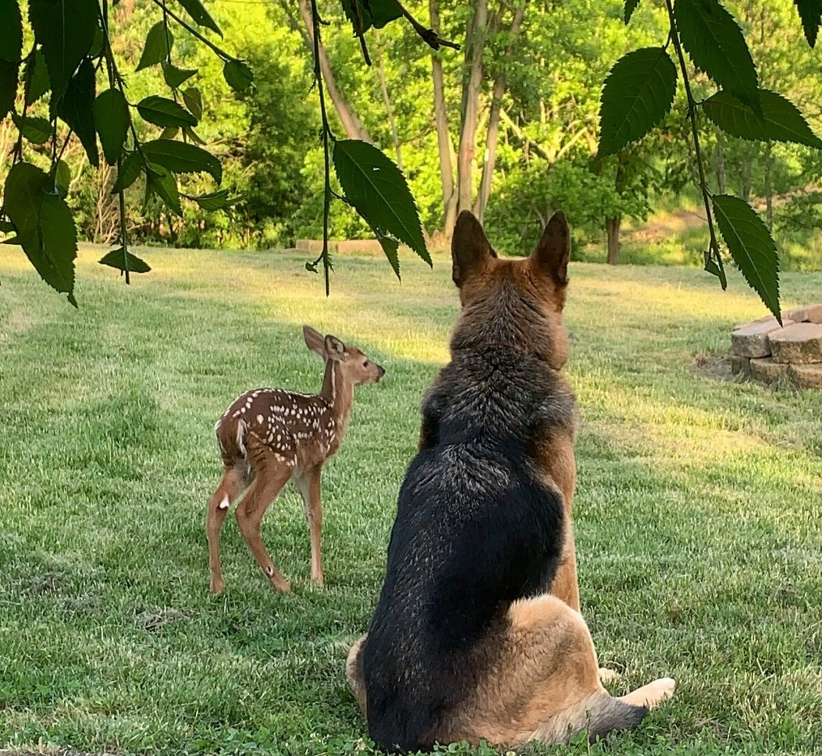 Compassion Outlawed: All Injured and Orphaned Fawns in Ohio Must Die.