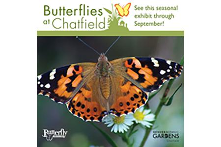 butterflies for exhibits