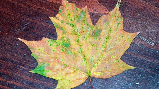 Free Fall Leaves