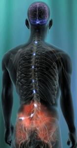 spinal cord stimulator4