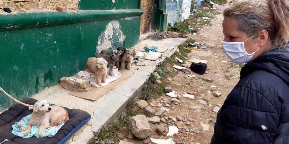 ¿Cuál es el protocolo para atender a los animales en casos de demolición y desalojo?