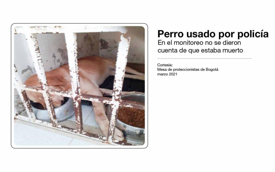 Animales en riesgo por mala planeación en el Instituto Distrital de Protección Animal. Denuncia del 15 de marzo de 2021