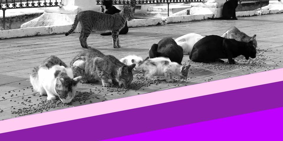 ¡Pilas con los temas animalistas del Plan de Desarrollo!:  concejal animalista de Bogotá, Andrea Padilla