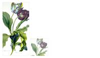 tulip-pad-sticky