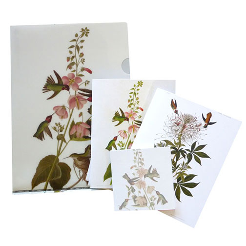 a gift pack of an half-letter-sized folder with two note cards and a matching sticky pad with Audubon's Columbian hummingbird, and a ruffed-neck hummingbird, perfect for bird lovers.