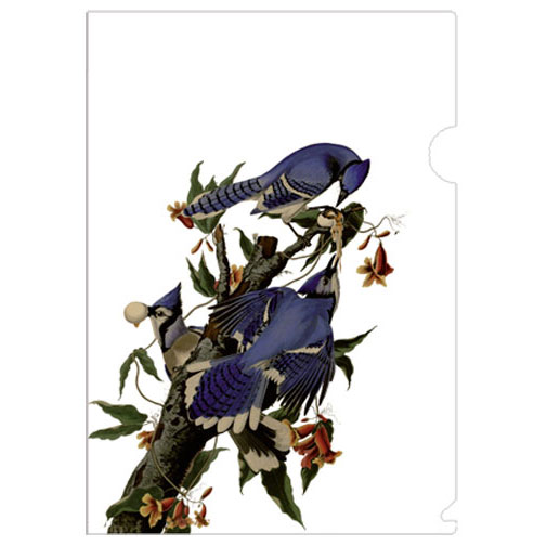a very practical & versatile half-sized folder with Audubon's blue jay, a perfect gift for a bird lover!