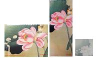 floweringlotus-3pack