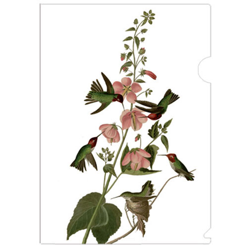 a half-letter sized folder easily fit inside a pocketbook, printed with John James Audubon(1785-1851)'s Columbian Hummingbird sketch. Audubon was a French-American ornithologist, naturalist, hunter and artist, who painted, catalogued and described the birds of North America