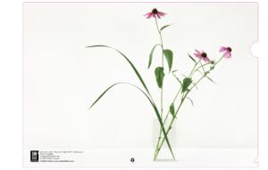 Echinacea arrangement Shibui Folder