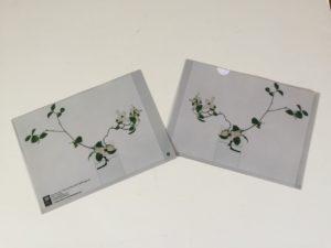 Paula Chamlee From the Field Gift Set two - Wild Dogwood folder