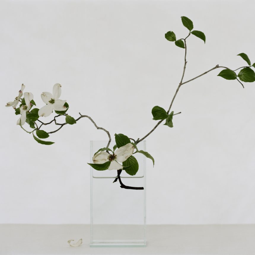 lovely letter-sized folder using stunning image of white dogwood with blooms captured by famed photographer Paula Chamlee