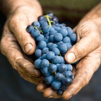 holding grapes