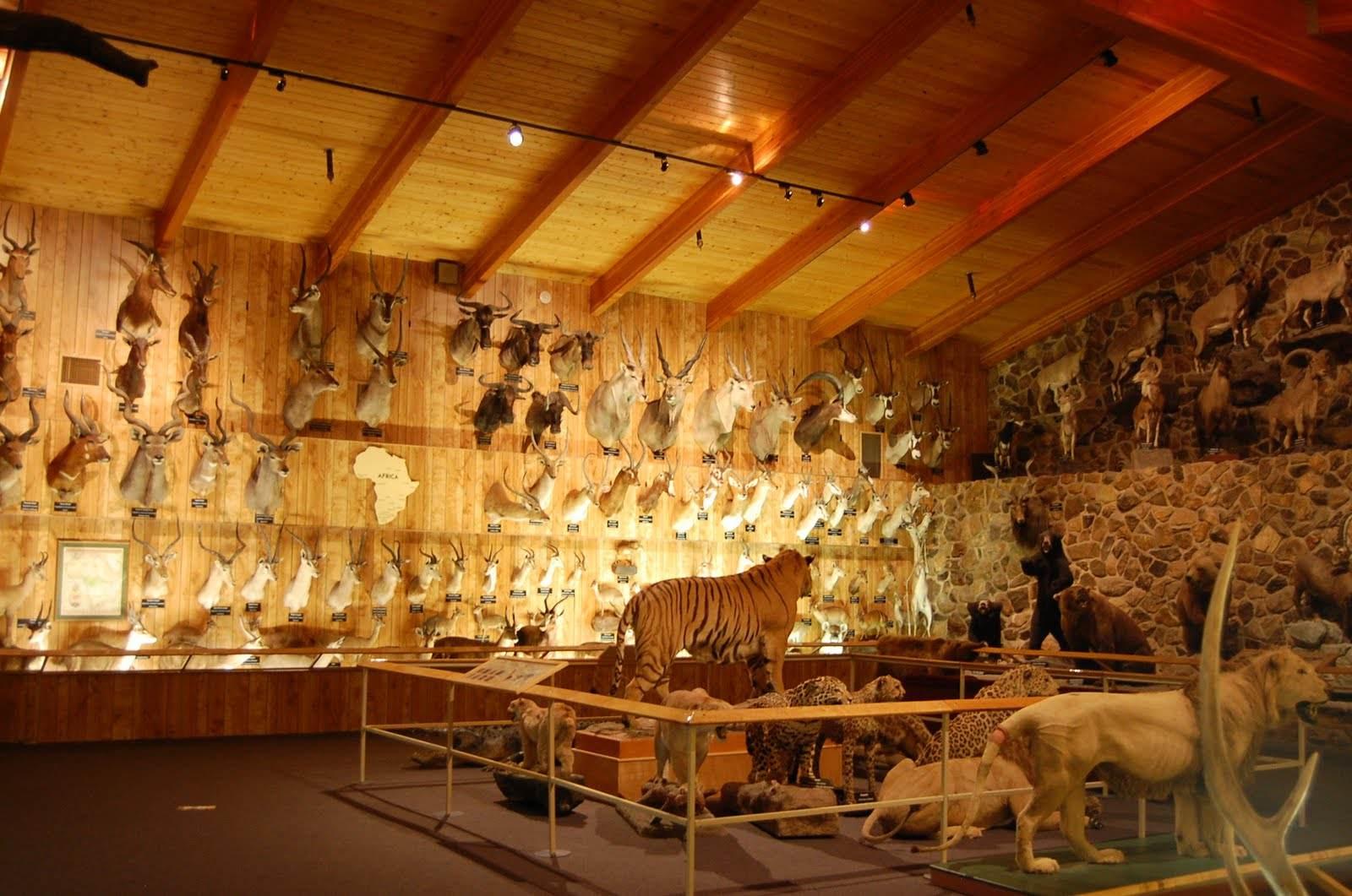 International Wildlife Museum located in Tucson, AZ.