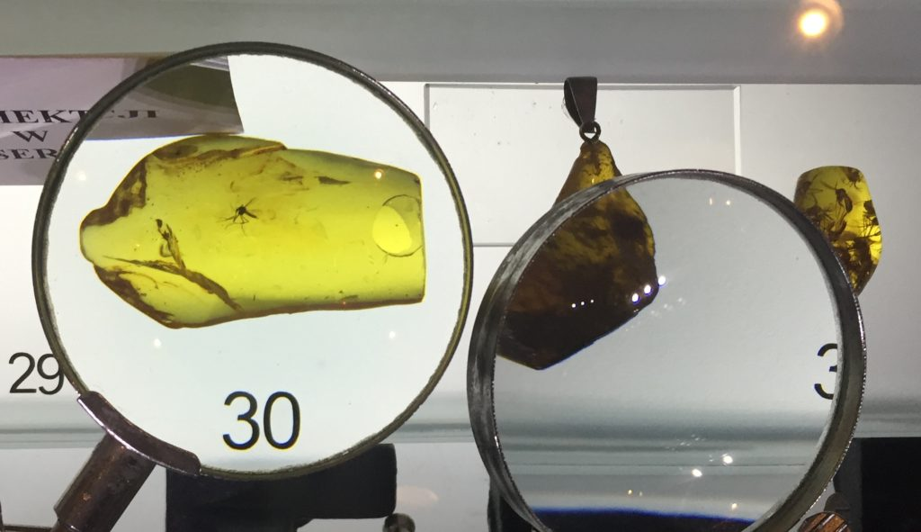polish-amber-animal-inclusion